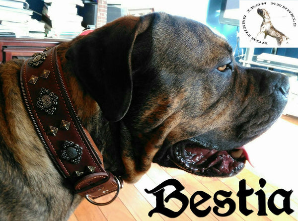 Presa Canario with Aztec dog collar from Bestia Collars