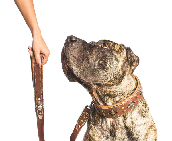 Presa Canario  dog collar from Bestia Collars