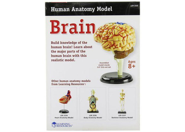 MODELO ANATOMICO CEREBRO - BRAIN MODEL