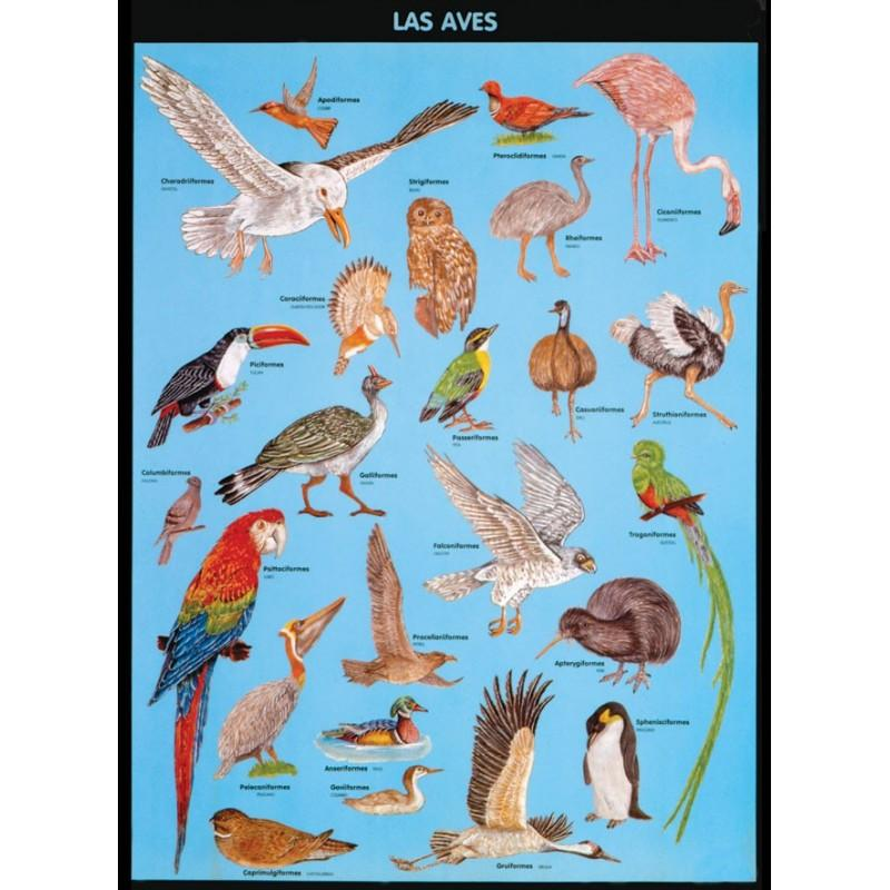 POSTER LAS AVES