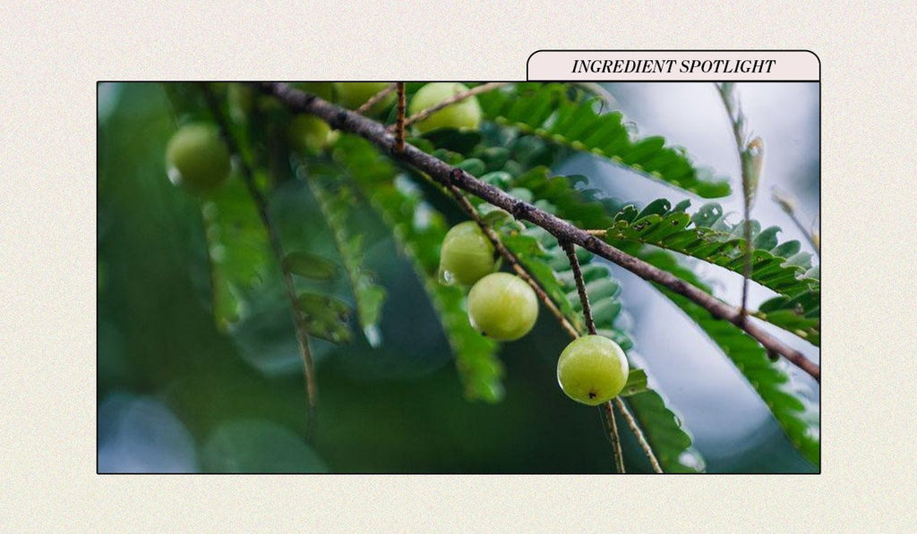 The Brightening, Anti-Aging Benefits of Amla (Indian Gooseberry)