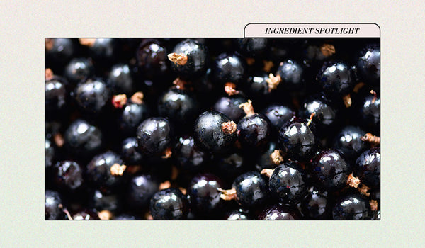 Black Currant Seed Oil, a Holistic Hero For Practically Any Skin Type