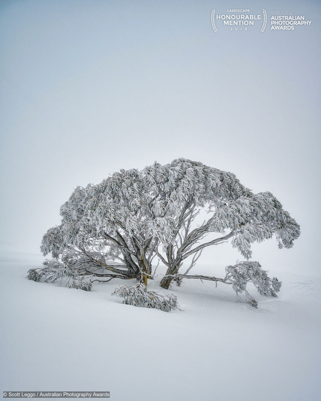 Top 100 Australian Photography Awards