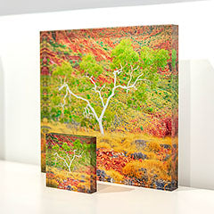 Scott Leggo acrylic desk block - Branches Of Life