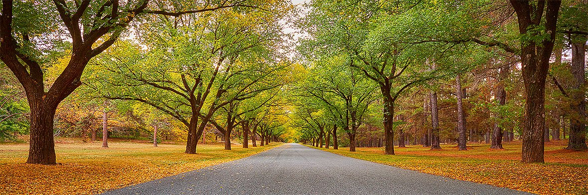Autumn Drive - Governor General driveway Canberra