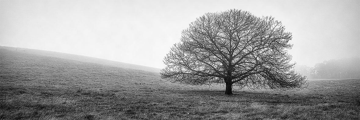 Country Mist - Tree in fog, Stanley, Victoria