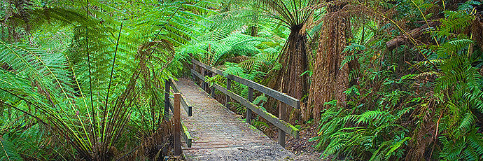Entering The Forest Otway Ranges