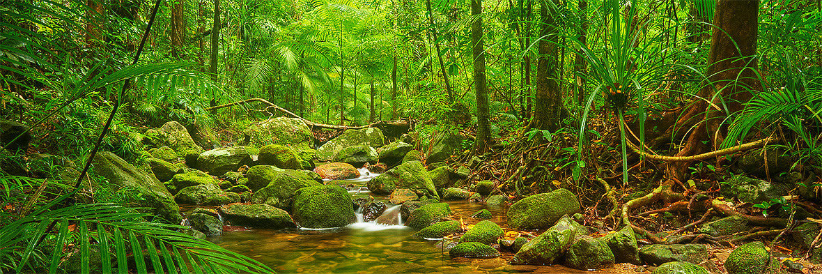 Daintree Tranquility, North Queensland, Australia