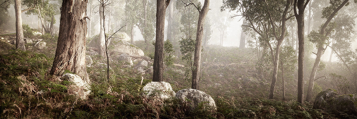 Forest In Fog Mt Buffalo