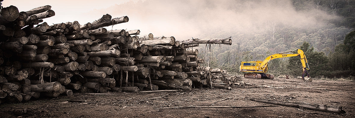 Logging Buckland Valley Victoria