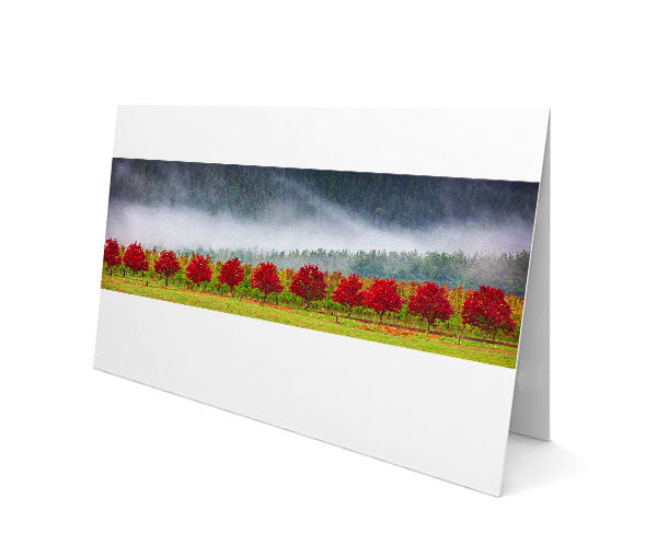 Greeting Cards - Red Row Of Trees - Greeting Card Pack