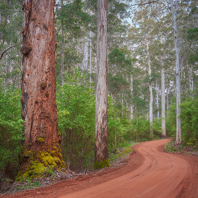 Road through Karri Forest South-West Western Australia