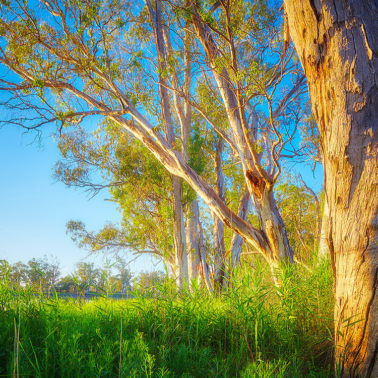Leaning In - Murray River