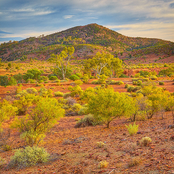 Lost In Time - Flinders Ranges