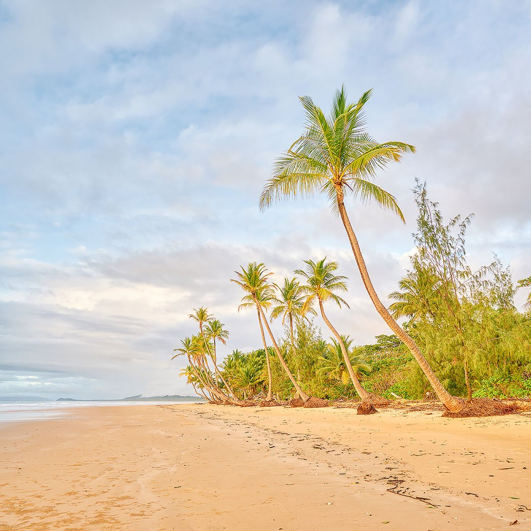 Mission Palms - Mission Beach, Queensland