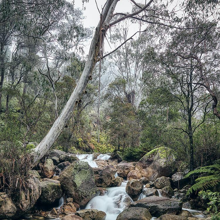 Mountain Flow - Mount Buffalo National Park