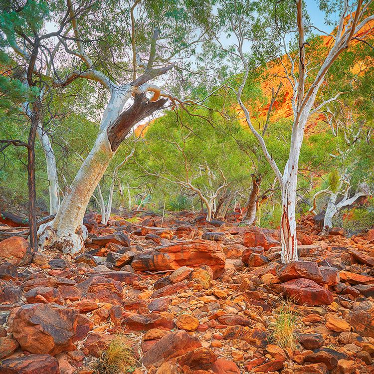 Outback Sanctuary - Kings Canyon, Northern Territory