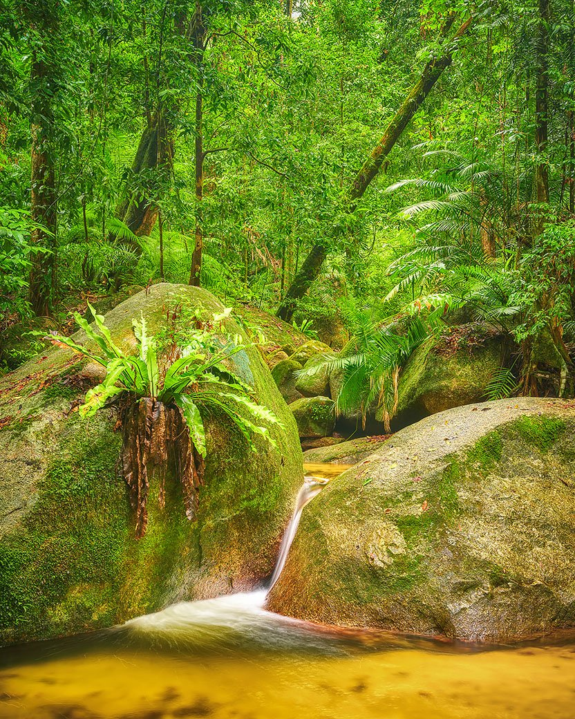 Rainforest Magic - Wurrmbu Creek, Daintree Rainforest National Park, Queensland
