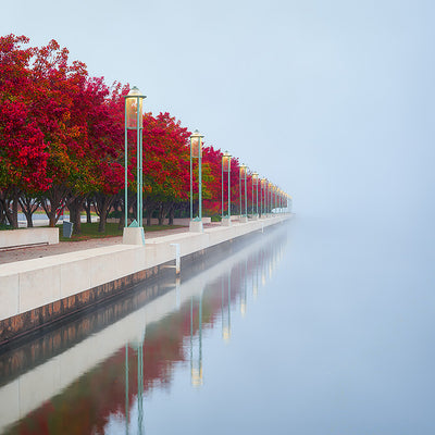 Red Serenity - Red autumn colours Lake Burley Griffin Canberra