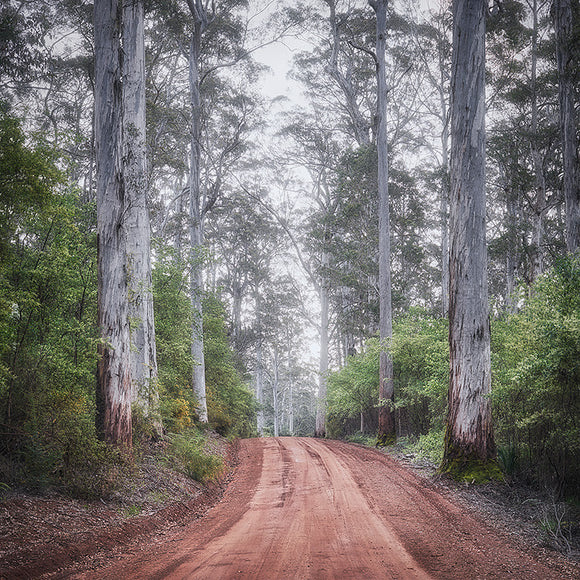 Karri Forest South-West Western Australia