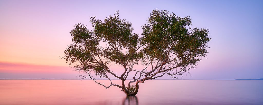 Tidal Tranquility - Grey Mangrove on Fraser Island Queensland