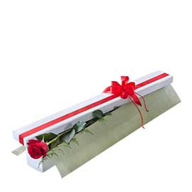 1 Single Premium Colombian Red Rose Presentation Box