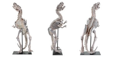 Standing Raptor Sculpture - Luxury Home Accessories - 5mm Design Store London