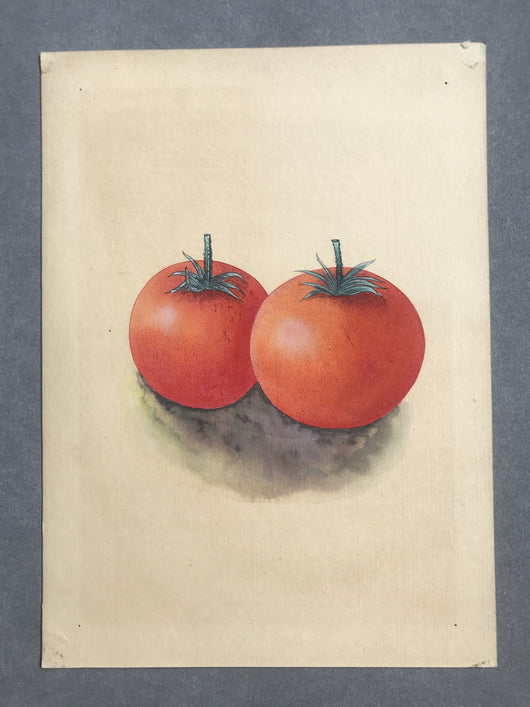 Tamatar - water colour on paper