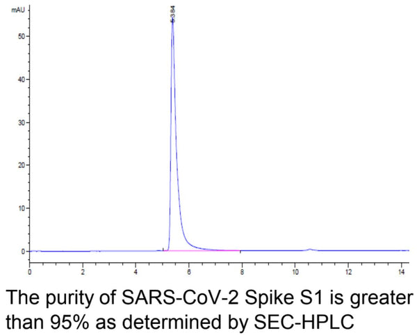 Recombinant SARS-CoV-2 Spike S1