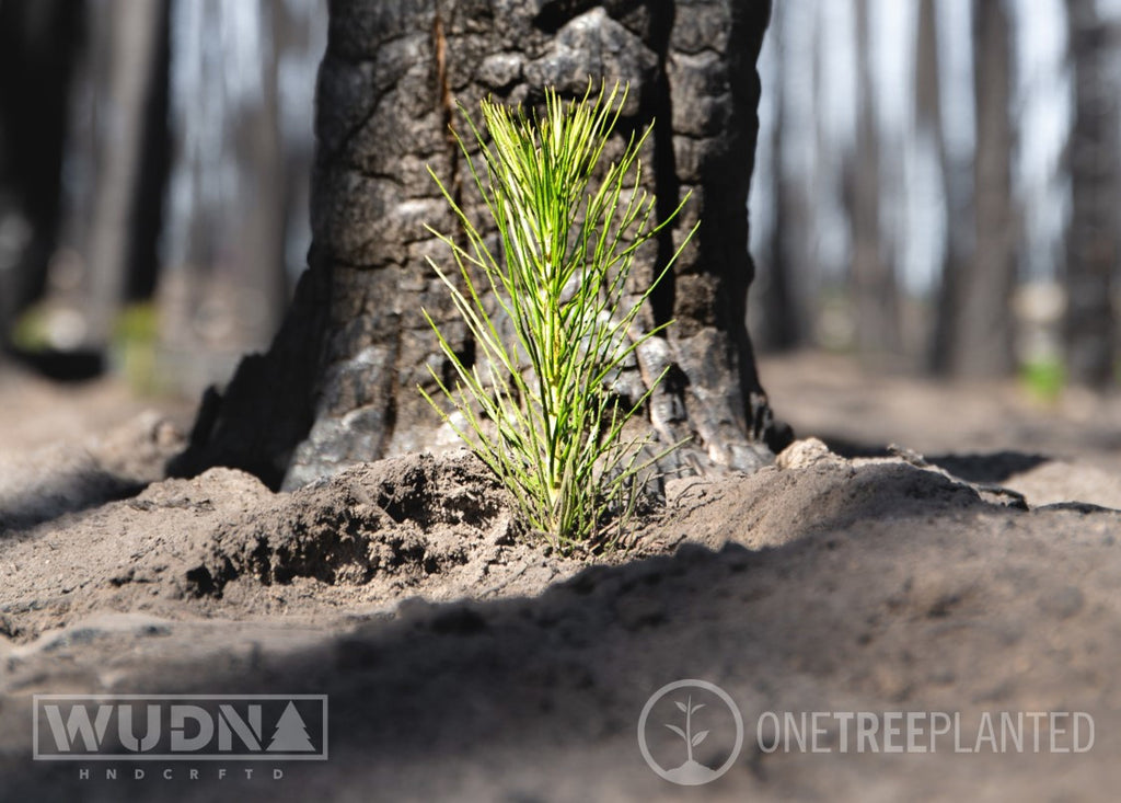 WUDN is proud to announce our partnership with OneTreePlanted - Let's Plant Some Trees!
