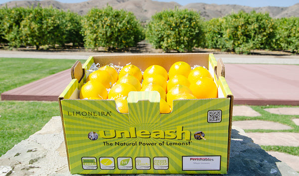 Fresh Fun - Meyer Lemons