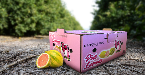 Fresh Fun - Pink Lemons