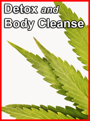 Detoxification and Body Cleanse
