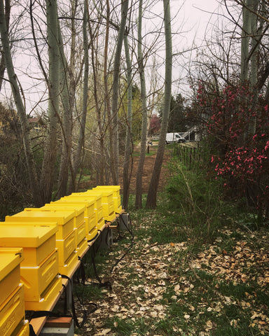 honey bee yard with hives