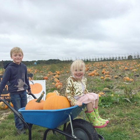 Picking pumpkins from Pickwell Farm
