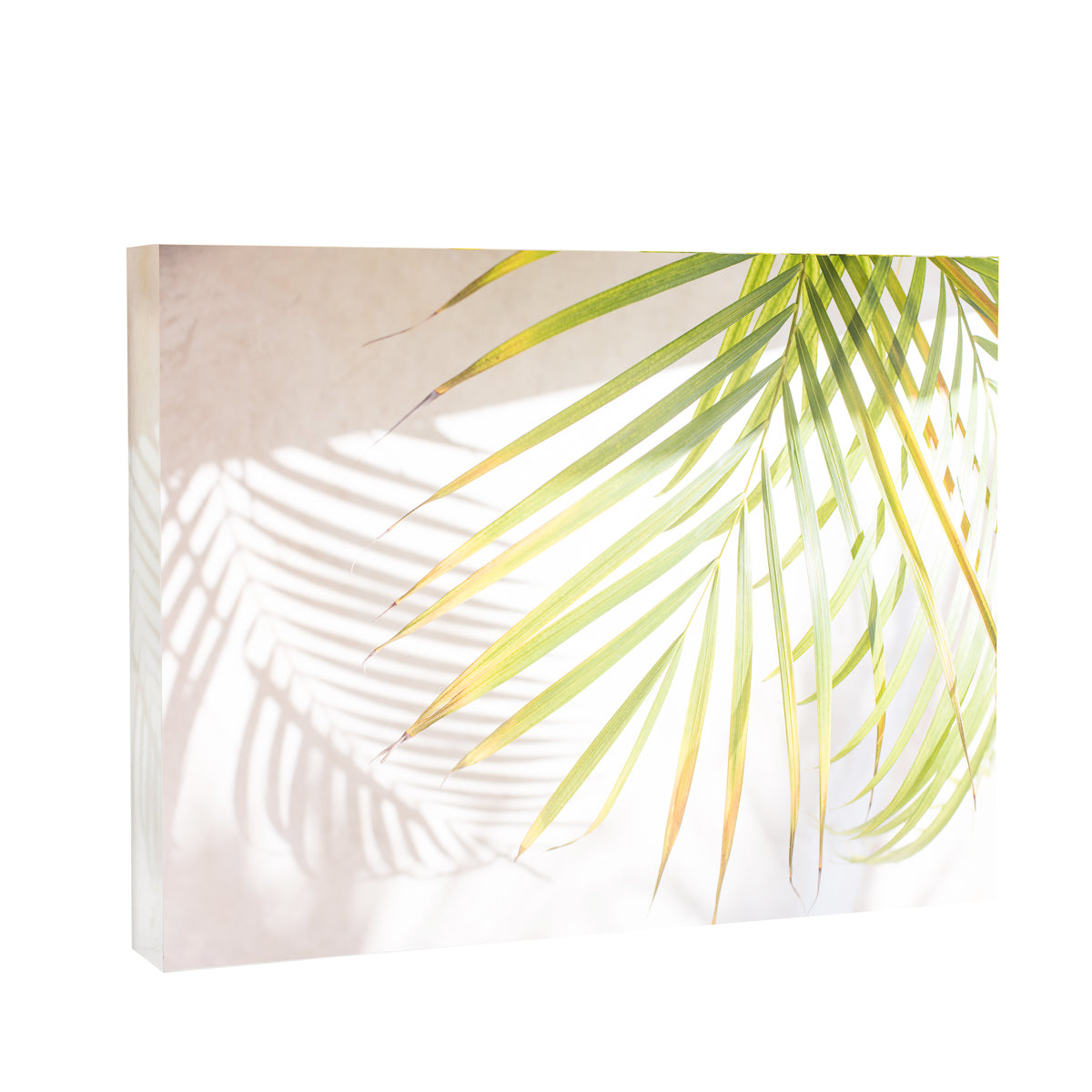 Lucite Block : Harbour Island Palm