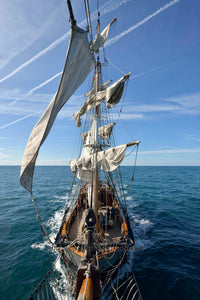 The Earl Of Pembroke - Michael Prior Photography