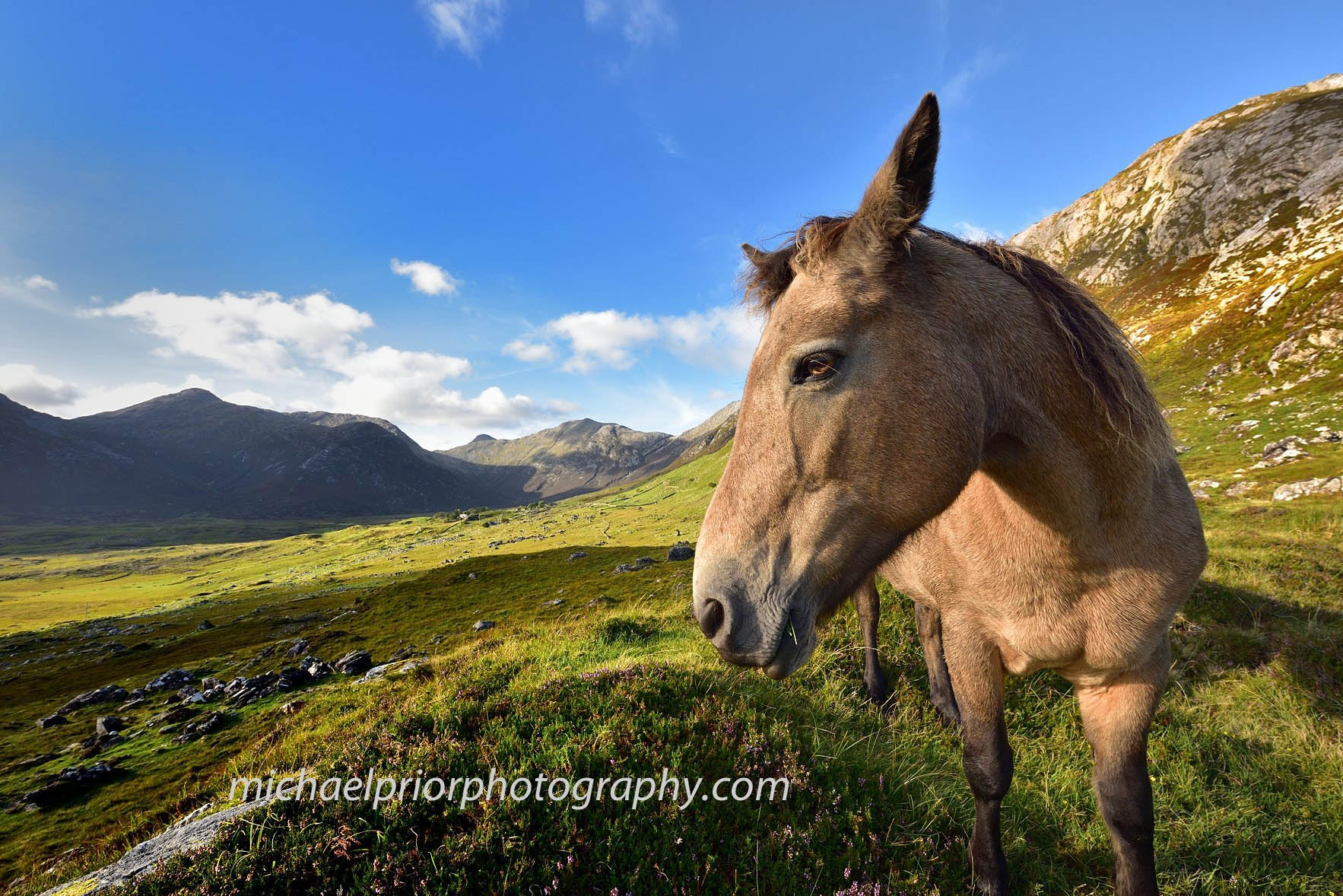 Connamara Pony In The Connamara National Park - Michael Prior Photography