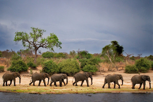 Elephant Tribe - Michael Prior Photography