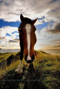 My Lovely Horse - Michael Prior Photography