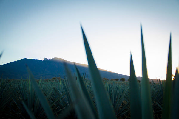 Discover Tequila – A Shot of Mexico