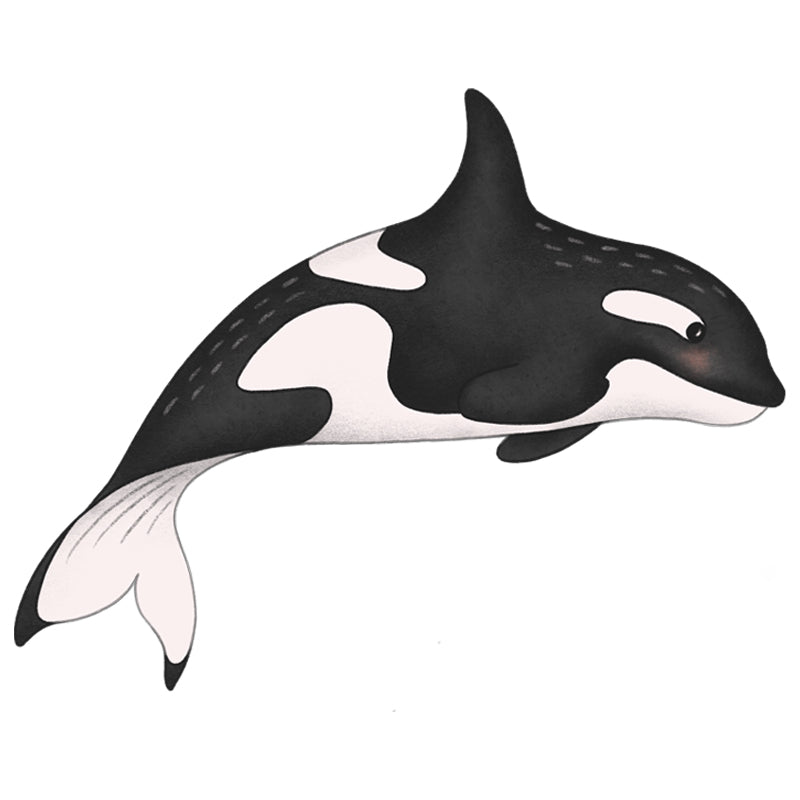 ds_Orca