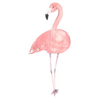FLAMINGO_swim