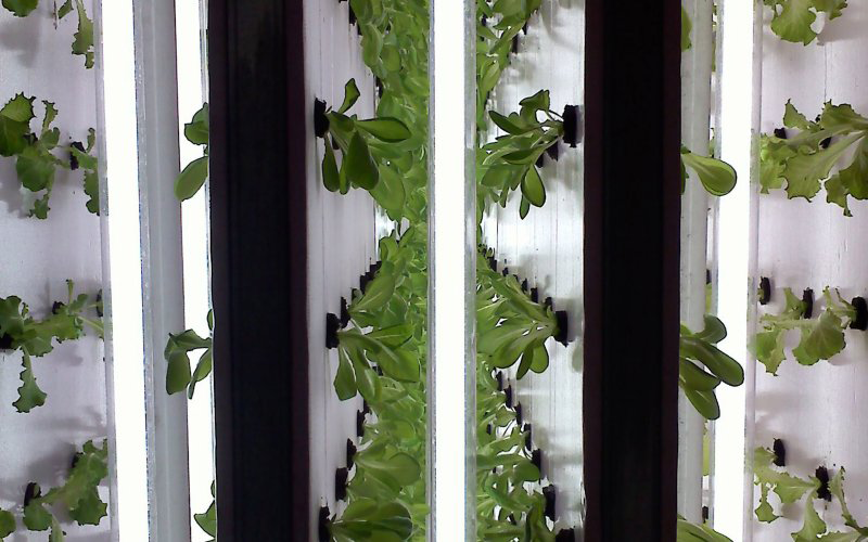 Creating the Most Impact For Your Hydroponic Garden Using Small Spaces