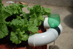 How to Start a Small Scale Hydroponic Farm - Part 2