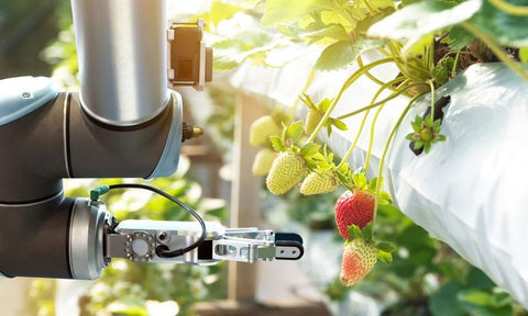 Agritech and sustainable cities