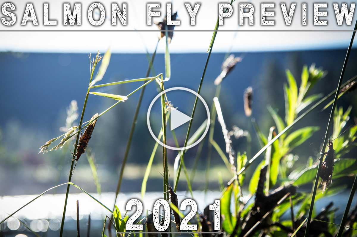 Salmonfly Preview 2021