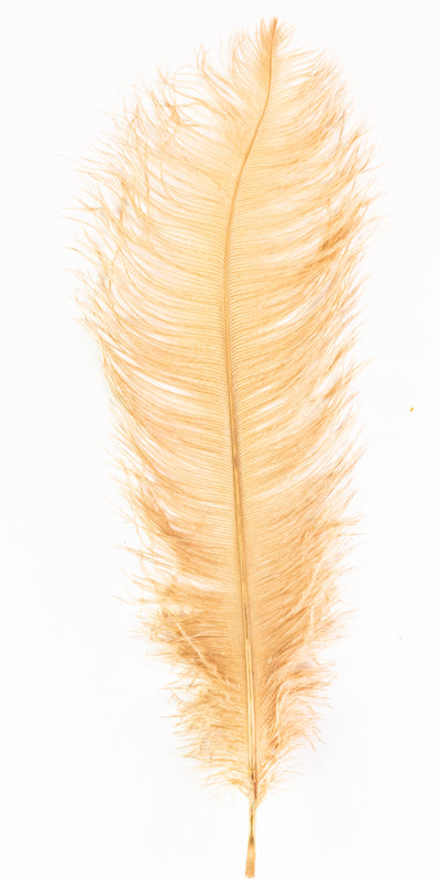 MFC Ostrich Plumes