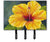 Yellow Hibiscus by Malenda Trick Leash or Key Holder TMTR0321TH68 by Caroline's Treasures