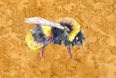 Buy this Bee on Gold Fabric Placemat